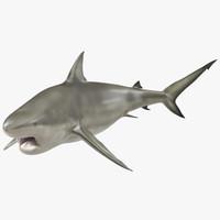 pigeye shark pose 2 3d model