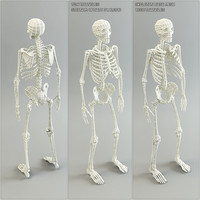 3d skeleton base mesh