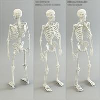Low Poly Base Mesh Skeleton