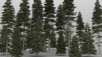 picea tree 3d max