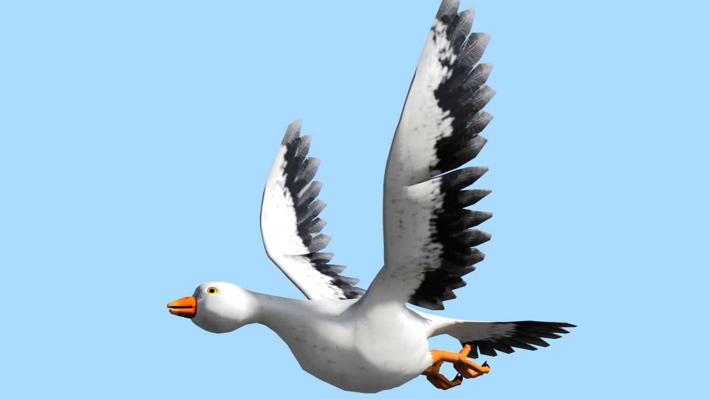 Bird_S001.jpg