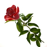 red rose 3d obj