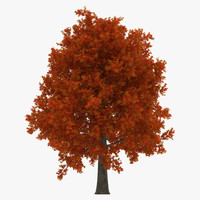 red oak tree autumn 3d model