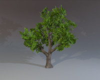 ready tree maps 3d max