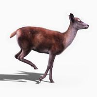 obj red deer doe fur