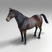 3ds new horse
