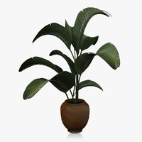 Large Houseplant