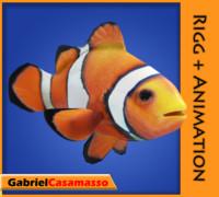 clow-fish amphiprion ocellaris 3d x
