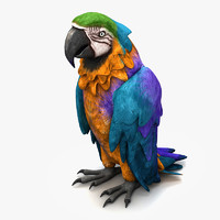 parrot species 3d model
