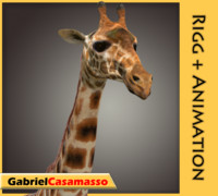 giraffe giraffa animation 3d model