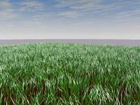 c4d grass scene sky
