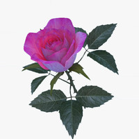 3ds rose pink v2