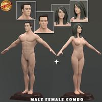 3d model modeled anatomy