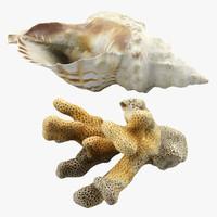 3dsmax seashell coral