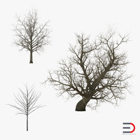 3d max winter red maple trees