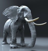 Elephant (High Poly)