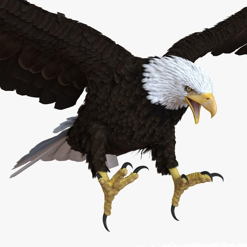 Baldl Eagle 3ds model 00.jpg