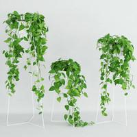Scandens plant 3