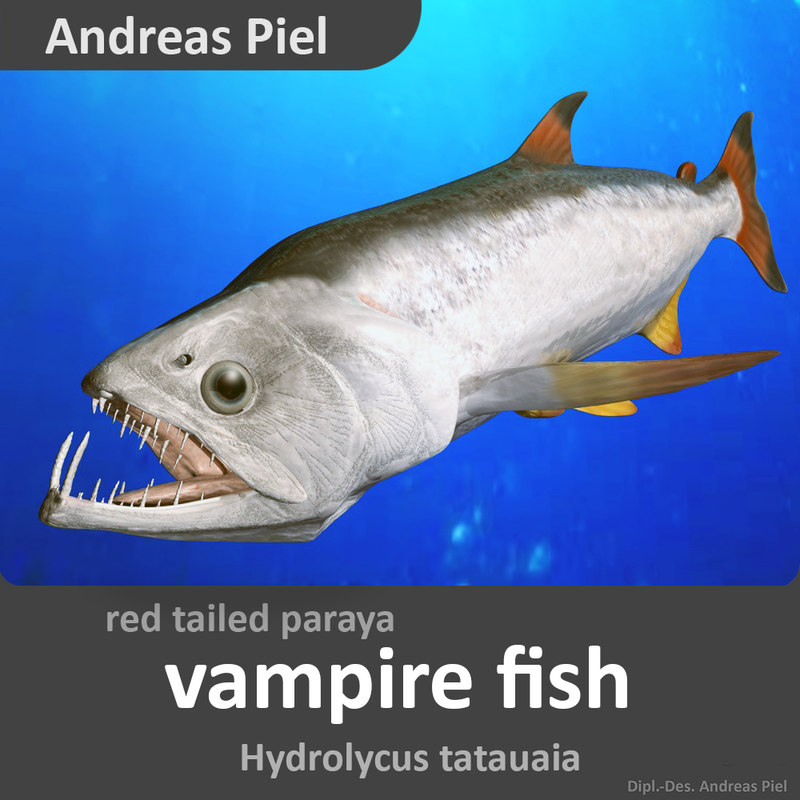 3d model of red tail paraya for Vampire fish for sale