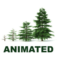 3d fir tree animation