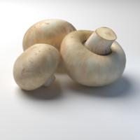button mushroom champignon max