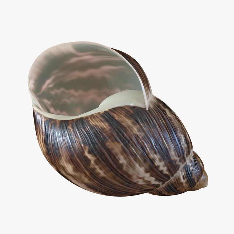 Marginata Shell 3d model 01.jpg