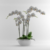 Orchid Moth white pottery