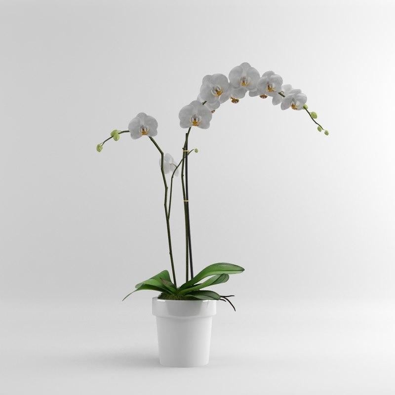 Orchid_W_single_01.jpg