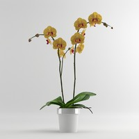 orchid moth orange 3d model