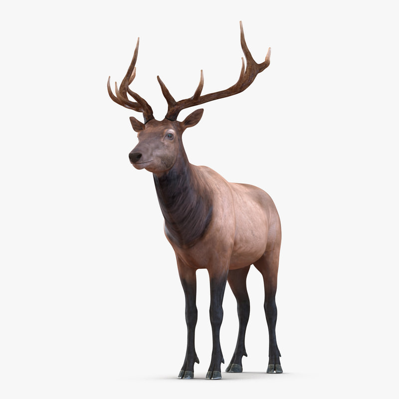 Elk Rigged 3d model 01.jpg