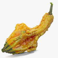 Yellow Crookneck Squash Pumpkin