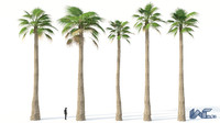 free 3ds mode palm washingtonia tree