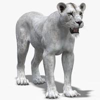maya lioness 2 white