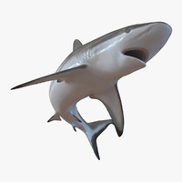3d grey reef shark pose
