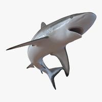 3d grey reef shark pose