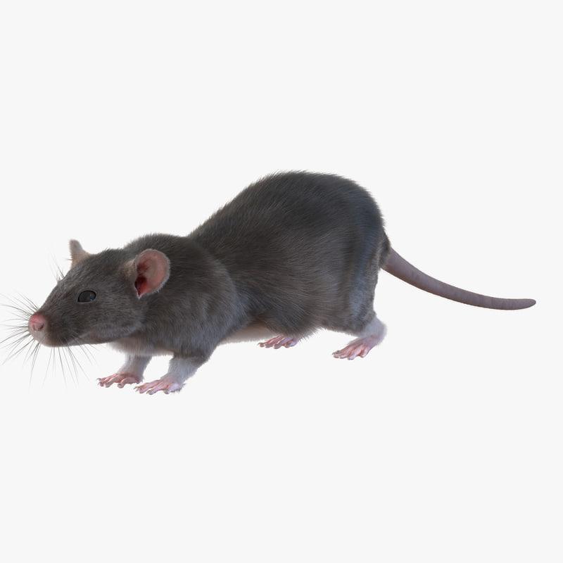 Rat 3d model 01.jpg