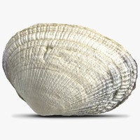 sea shell 3d 3ds