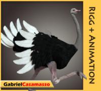 ostrich struthio camelus x