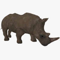 3d photorealistic low-poly rhino