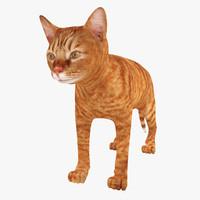red cat max