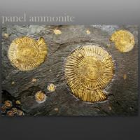 3d model panel ammonite