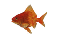 goldenfish fish 3ds