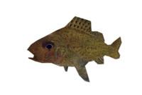 fish ruff 3d max