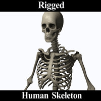 3d model human skeleton rigging