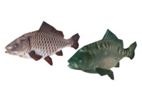 fish carps 3d 3ds
