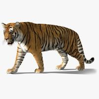 tiger fur 3d model