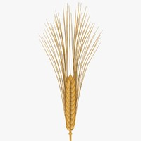 wheat scanline 3d max