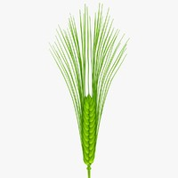 3d model of wheat green