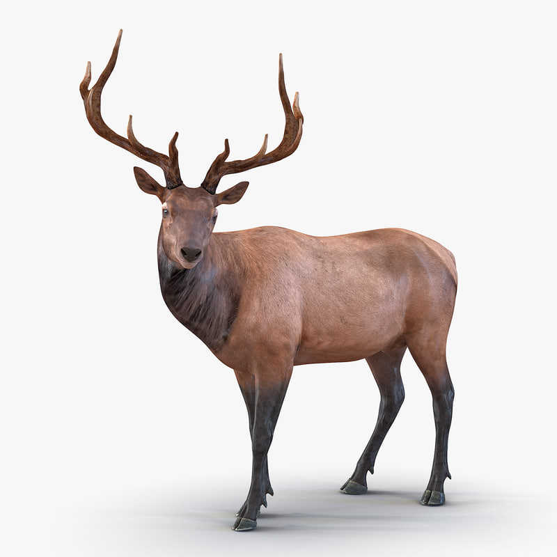 3ds model of Elk 01.jpg