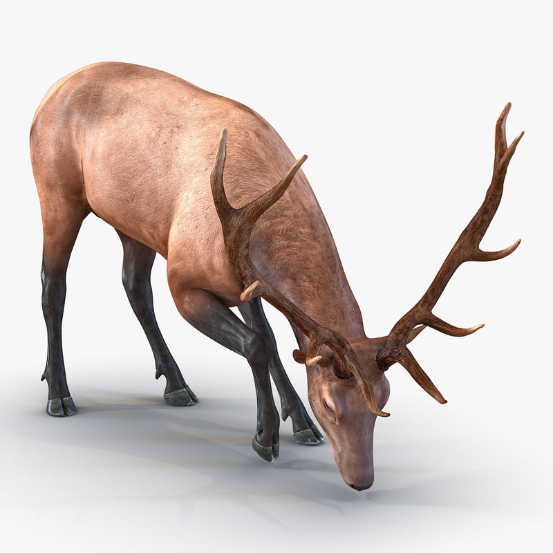 Elk 3ds model 01.jpg